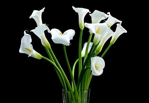Подходящие цветы в подарок мужчине