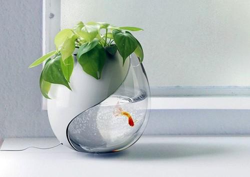 акваферма